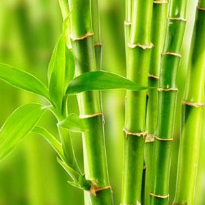 Ценные свойства бамбука и чем хорош массажный веник